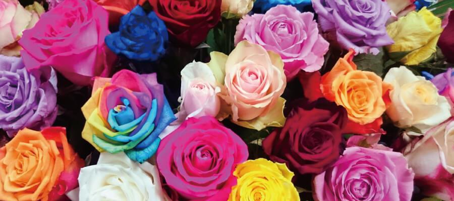 バラは色で花言葉が違う