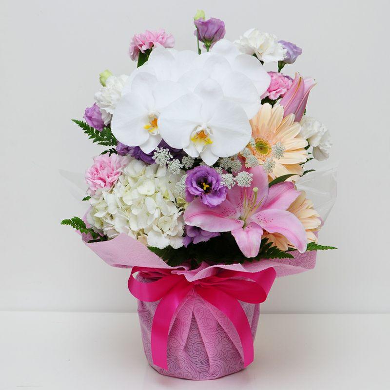 胡蝶蘭の洋風アレンジメント